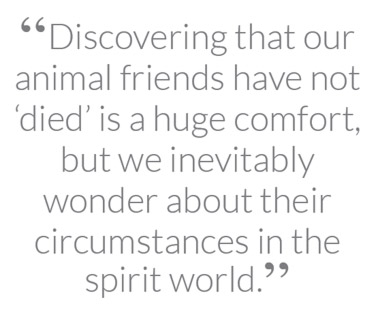 """Discovering that our animal friends have not 'died' is a huge comfort, but we inevitably wonder about their circumstances in the spirit world"""