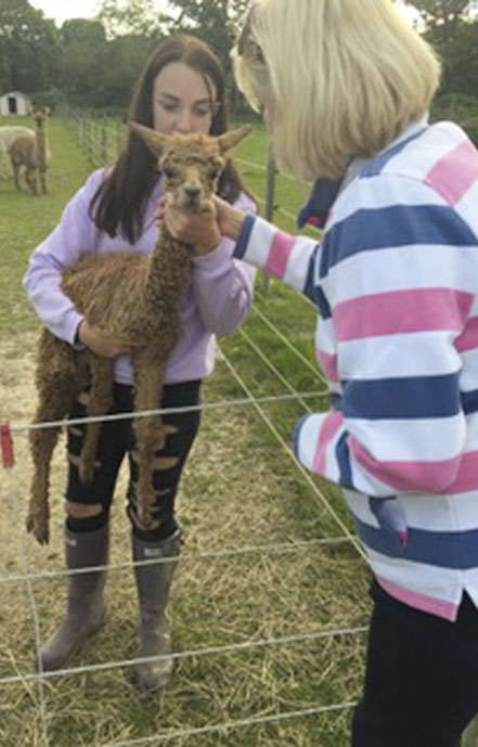 HERE Phillippa Read gives healing to a young alpaca named Sunny. He is being held by Christabelle Kemmish, the daughter of the farm's owner.